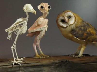 owl-without-feathers